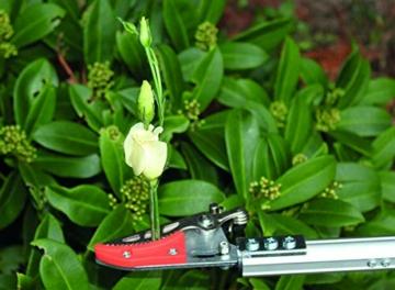 garten-primus-rosenschere-rosenkavalier-klein-schwarz-63-x-9-x-31-cm-01415-2