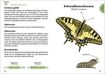 anaconda-taschenfuehrer-insekten-70-arten-entdecken-und-bestimmen-3