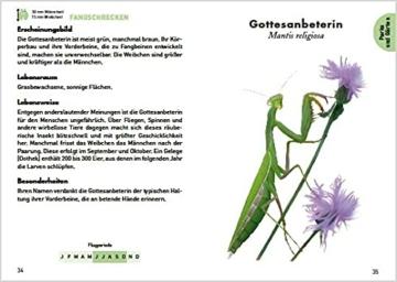 anaconda-taschenfuehrer-insekten-70-arten-entdecken-und-bestimmen-4