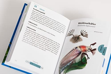 anaconda-taschenfuehrer-insekten-70-arten-entdecken-und-bestimmen-6