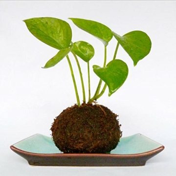 baoblaze-kreative-moos-pflanzschale-kugel-from-12-cm-2