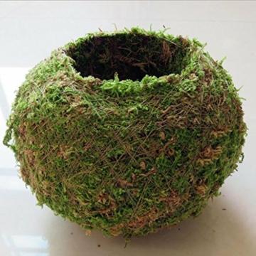 baoblaze-kreative-moos-pflanzschale-kugel-from-12-cm-6