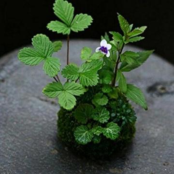 baoblaze-kreative-moos-pflanzschale-kugel-from-12-cm-7