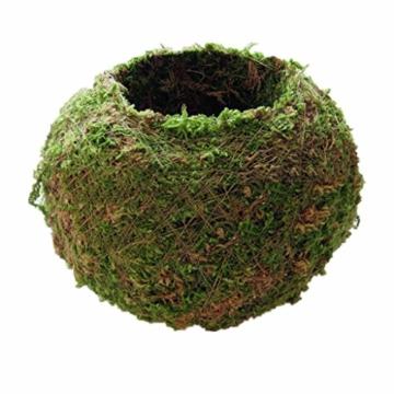 baoblaze-kreative-moos-pflanzschale-kugel-from-12-cm-8