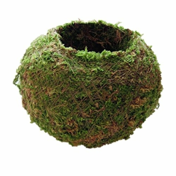 baoblaze-kreative-moos-pflanzschale-kugel-from-12-cm-9