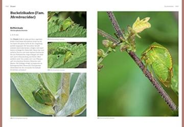 das-grosse-blv-handbuch-insekten-ueber-1360-heimische-arten-3640-fotos-natur-11