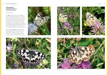 das-grosse-blv-handbuch-insekten-ueber-1360-heimische-arten-3640-fotos-natur-4
