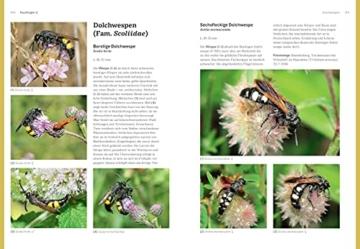 das-grosse-blv-handbuch-insekten-ueber-1360-heimische-arten-3640-fotos-natur-7