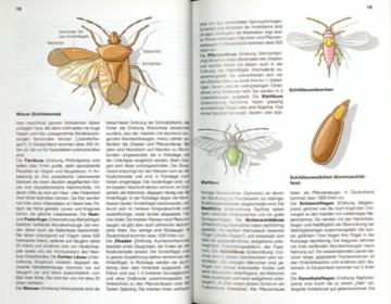 der-neue-kosmos-insektenfuehrer-extra-die-wichtigsten-spinnentiere-2