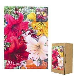 echte-lilienzwiebeln-in-verschiedenen-farben-blumenzwiebeln-in-geschenkverpackung-mehrjaehrig-gartenpflanzen-winterhart-knollen-lilium-lilien-hohe-qualitaet-20-lilien-tiger-mix-1