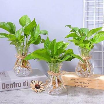 klarglasvasen-fuer-blumen-mit-schnurseil-3-teilige-gluehbirnenhyazinthenvasen-bud-avocado-vase-edelwickenvase-fuer-hydroponikpflanzen-narzissen-orchideen-fuer-desktop-tisch-innenfensterbank-dekor-4