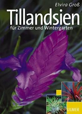 tillandsien-fuer-zimmer-und-wintergarten-garten-ratgeber-1