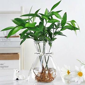 toruiwa-hyazinthe-glasvase-hydrokultur-glas-vase-blueten-vasen-fuer-hyazinthe-sukkulenten-luftanlagen-pflanzen-dekoration-14-5-6-5-7-5cm-transparent-6-stueck-4